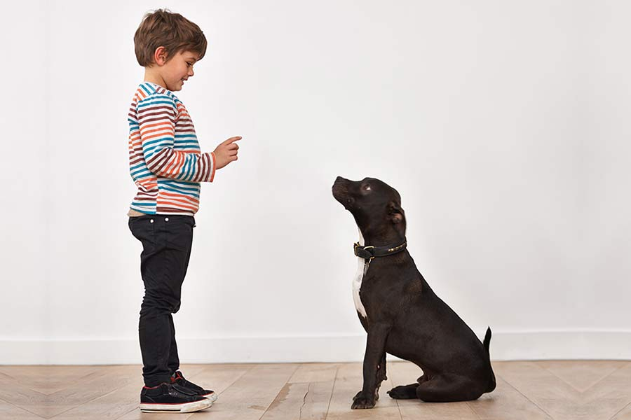 "Should You Say ""Yes"" to the Pet?"